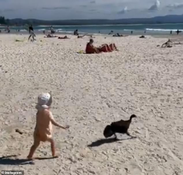 Fun in the sun? Doting father Matty J was slammed by some angry followers for letting daughter Marlie Mae, one, chase a brush turkey along the beach in Byron Bay