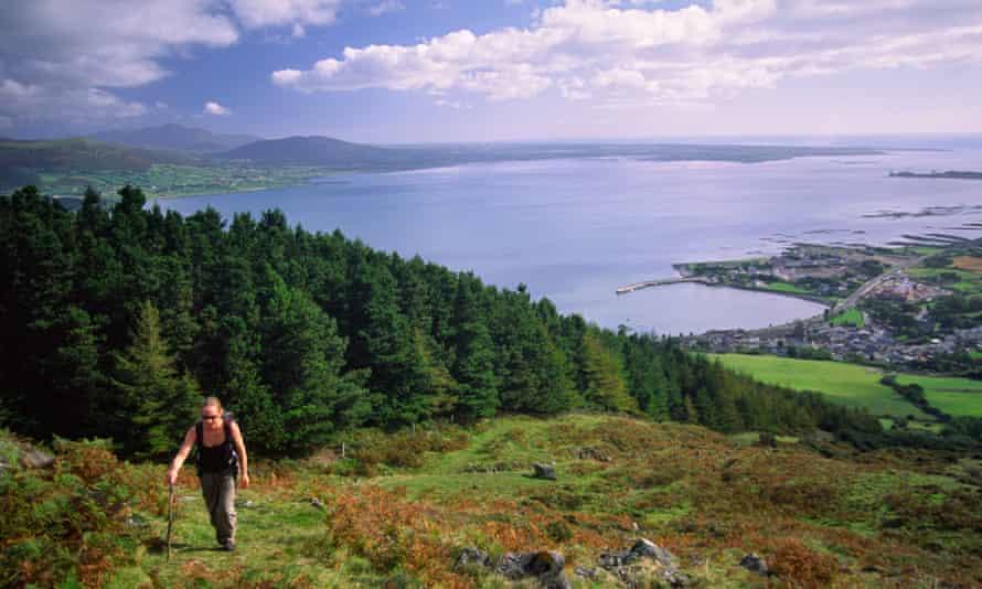 Walker climbing Slieve Foye above Carlingford Lough, County Louth, Ireland.