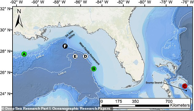 The Medusa was deployed in several locations off the Gulf of Mexico and the Exuma Sound in the Bahamas. The black circle F indicates where the giant squid was sighted