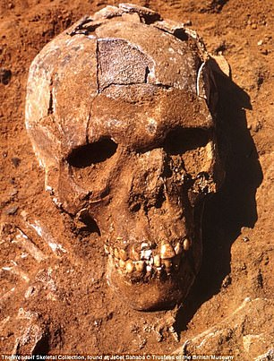 One of the skulls found is pictured here