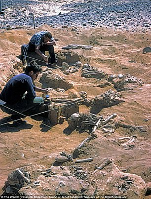 French scientists have been examining dozens of skeletons found grouped together in the Jebel Sahaba cemetery (pictured during excavations in 1965)