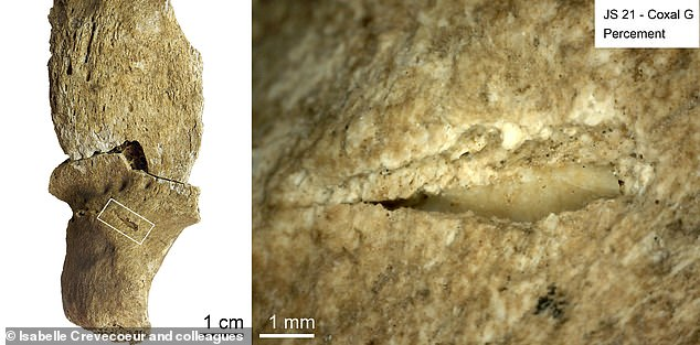 Scientists identified 106 previously undocumented lesions and traumas, and were able to distinguish between projectile injuries from arrows or spears (pictured), trauma from close combat, and traces associated to natural decay