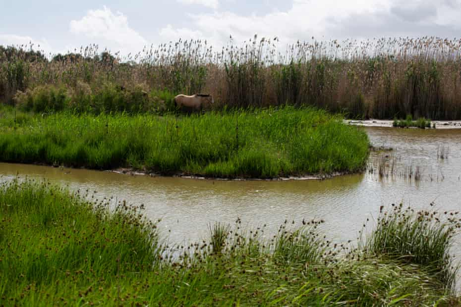 Horse stands in the Les Filipines lagoon