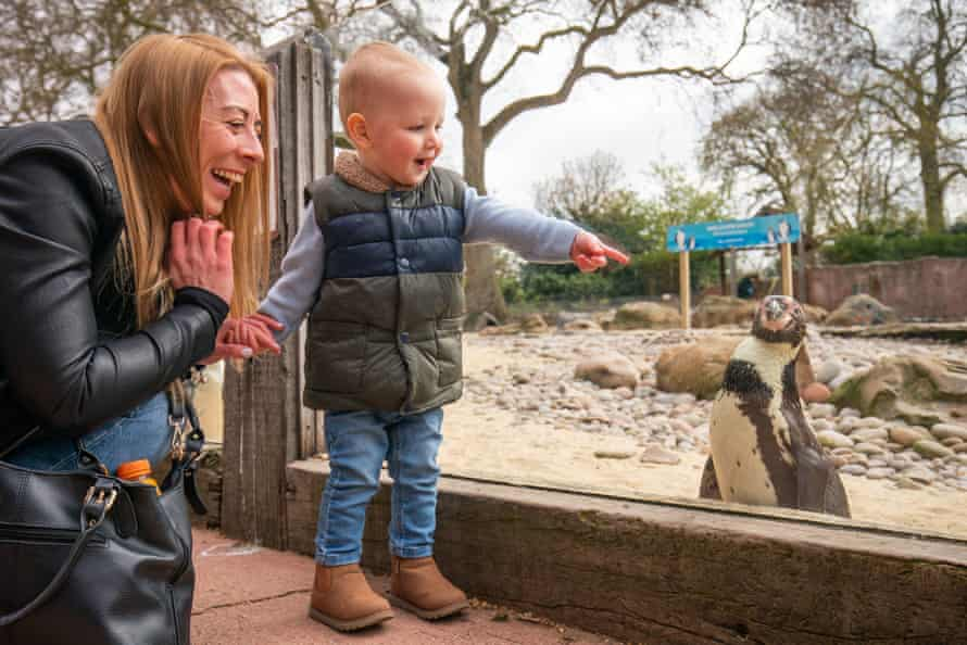 P-P-P-point at a penguin: London zoo is a popular attraction during half-term.