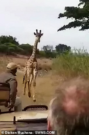 Luckily the driver was able to manoeuvre his vehicle out of the charging animal's way