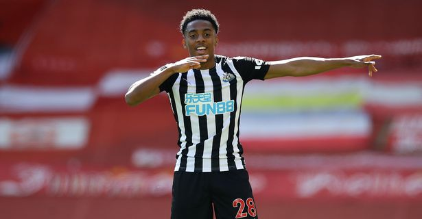 Joe Willock has played a huge role in ensuring Newcastle's Premier League safety