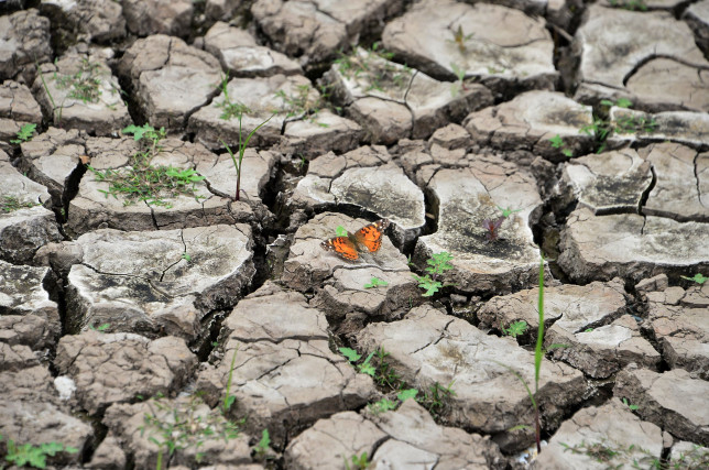 TOPSHOT - View of a butterfly on dry earth at Los Laureles reservoir during Earth Day in Tegucigalpa on April 22, 2019. - Los Laureles, which supplies over 50% of the 1,000,000-inhabitant Honduran capital of water, is suffering a drought. (Photo by ORLANDO SIERRA / AFP) (Photo credit should read ORLANDO SIERRA/AFP/Getty Images)