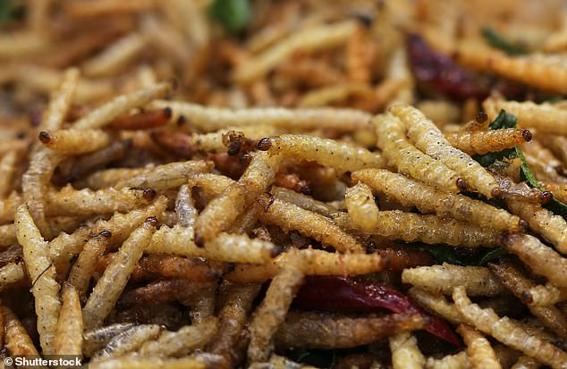 Pictured,the bamboo worm, larvae of a moth of the family Crambidae, turned crispy by frying. The University of Cambridge experts say insect larvae could be produced at scale to avoid mass malnutrition