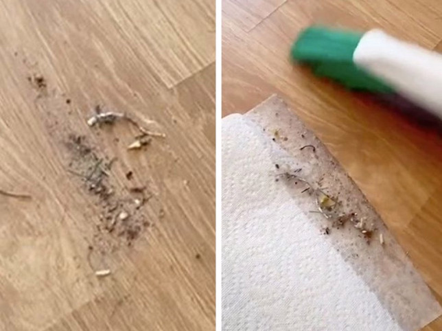Woman's genius hack gets rid of dirt not picked up by a dustpan credit: tiktok @shimmushim17