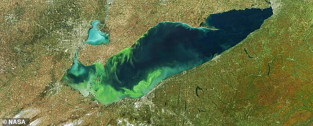 The toxic algal bloom caused by phosphate runoff at Lake Erie in 2011, which was one of the worst on record