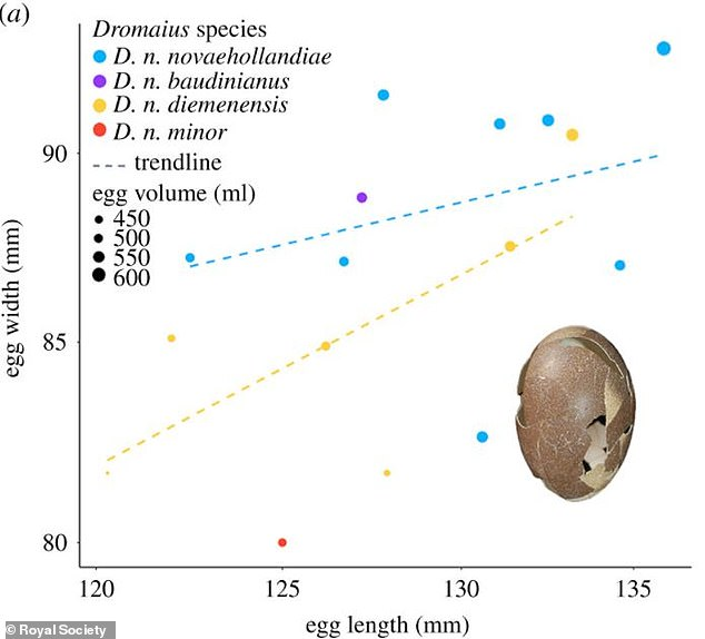 A regression analysis chart comparing the size of the dwarf emu egg size with the mainland emu