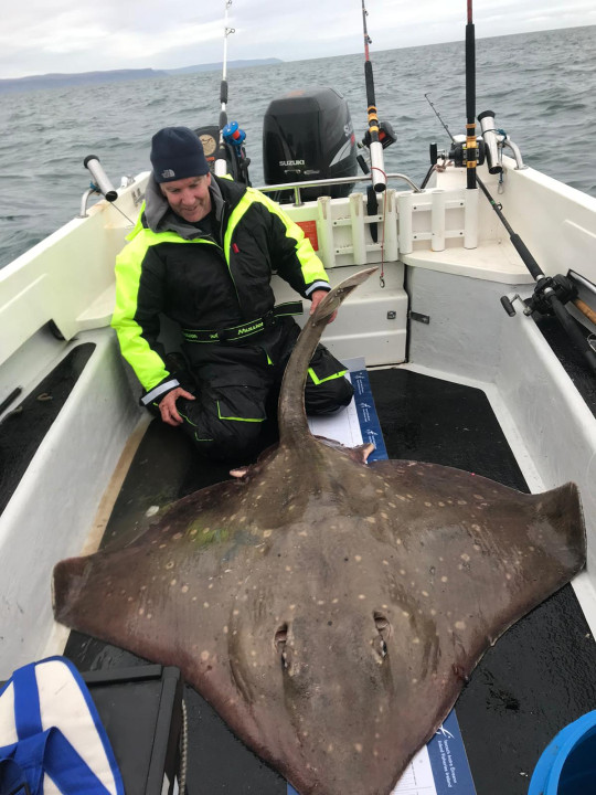 Catching a Flapper (Common) Skate, the largest in the world