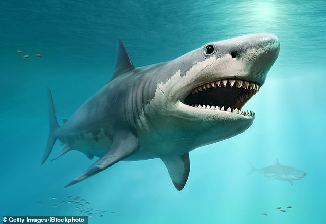 Fearsome: Megalodons (pictured) dominated oceans from about 15 to 3.6 million years ago