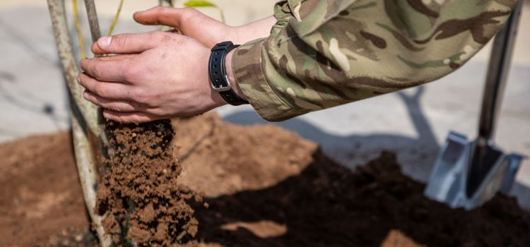 Army To Plant 2 Million Trees in Battle Against Climate Change 05062021 CREDIT MOD.jpg