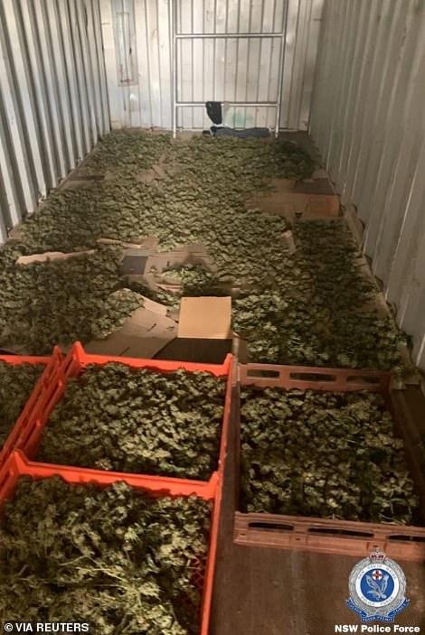 Cannabis seized in the raid
