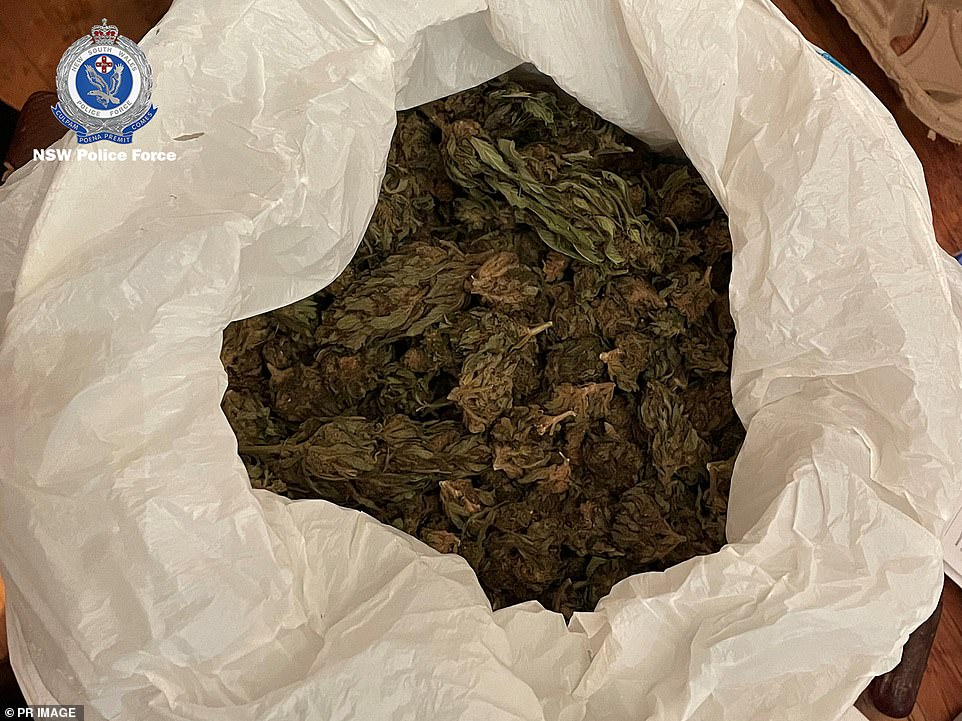 Cannabis inside a plastic bag after the drugs were taken off the streets in the massive bust