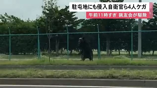 The bear stands on its hindquarters on a pavement after sprinting over a road