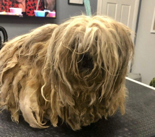 She had over 700g of matted hair