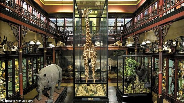 Ipswich Museum holds objects from around the world and its collections cover both human and natural history