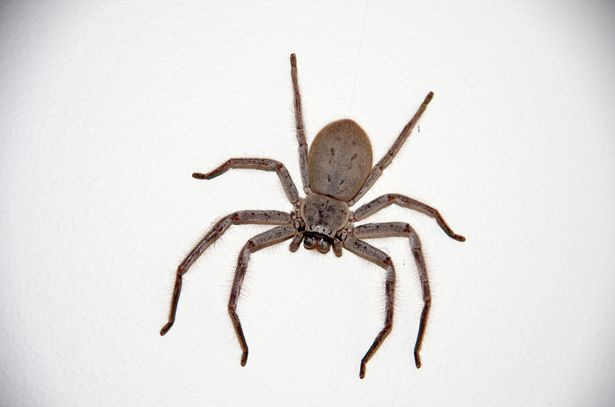 Luke said the huntsman spider was 'the size of his face'