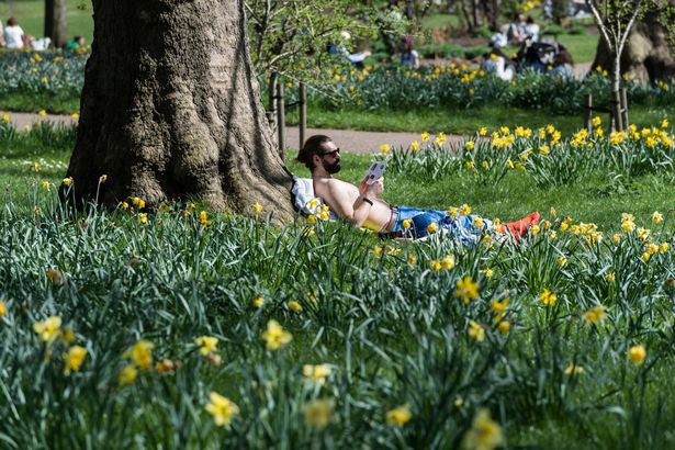 A man reads a book among blossoming daffodils in St James's Park, as people enjoy exceptionally warm and sunny weather