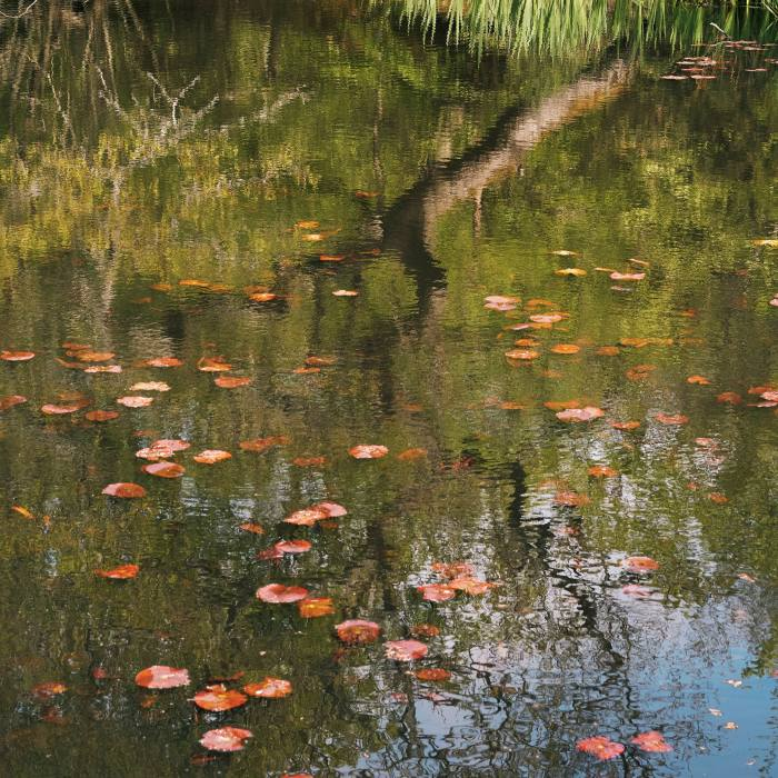 The pond by Earl's Path, which climbs into the heart of Epping Forest