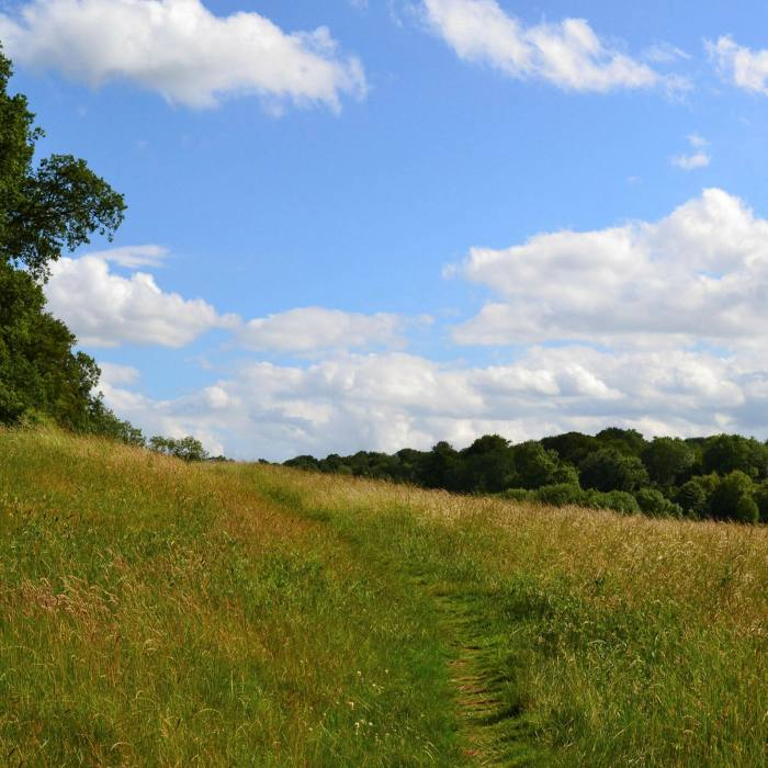 'Bucolic enough to make you feel you're deep in the Garden of England': the countryside between Downe and Biggin Hill