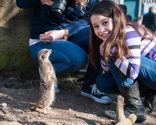 Get up close and personal with the animal kingdom?s cutest critters, at Drusilla?s Park in Alfriston. The meerkat experience includes the chance to feed them, ask the zoo keeper questions, and have your picture taken with them. From ?80pp, drusillas.co.uk https://www.drusillas.co.uk/close-encounters/meerkat-experience