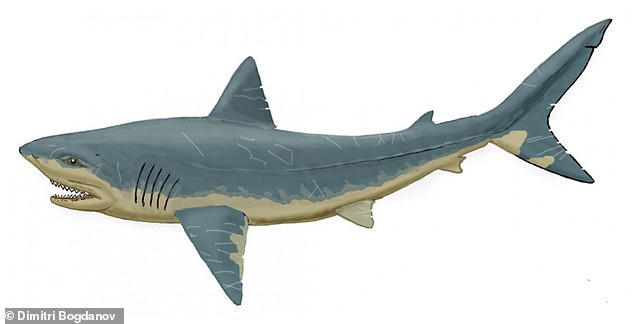 The shark teeth which have been identified come from several species, including from the extinct Late Cretaceous group Squalicorax. Pictured, an artist's impression of a Squalicorax shark
