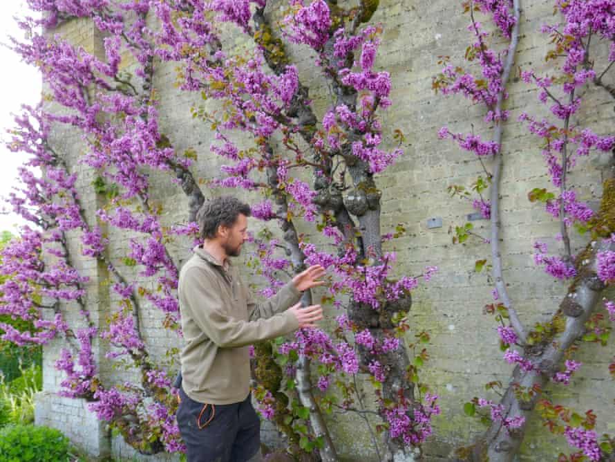 Wrest Park's head gardener, Andrew Luke, and the estate's Judas tree. Bedfordshire, UK