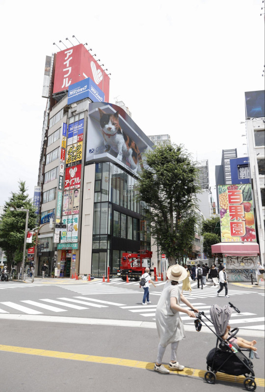 Mandatory Credit: Photo by Rodrigo Reyes Marin/ZUMA Wire/Shutterstock (12198040g) A digital billboard displays a big 3-D cat waking up and looking at pedestrians as if it might jump off the screen outside Shinjuku Station. The curved LED screen can display 4K images, creating a depth effect and jaw-dropping 3D effect from the rooftop of the recently constructed Cross Shinjuku building. The new 3D ads went viral on the internet after people spread videos of animal-shaped ads jumping off the screens in China and South Korea. Big 3D Cat Appears on a Billboard in Tokyo, Japan - 06 Jul 2021
