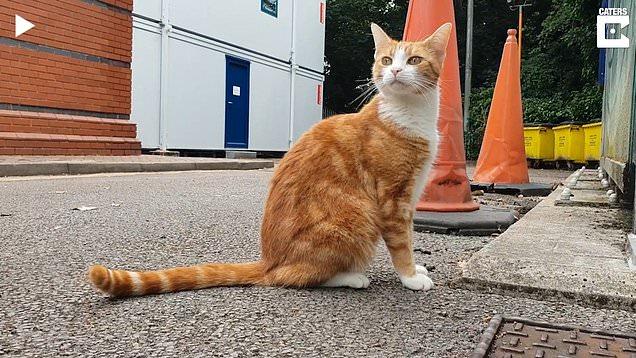 Cat lands job at train station