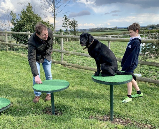 will and peter training shani on agility platforms in the garden
