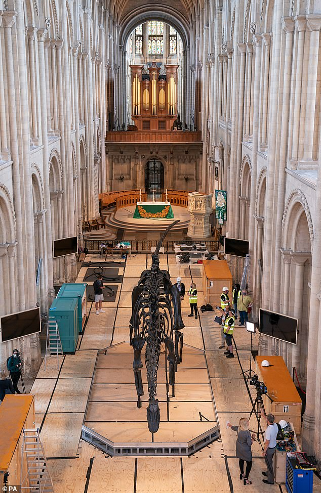 Dippy the Diplodocus, the Natural History Museum's famous diplodocus skeleton, before going on display to the public at Norwich Cathedral, Norfolk, on July 8