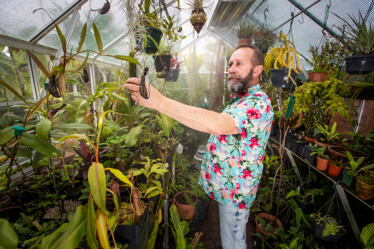 Mike Clifford at work in one of three greenhouses in his exotic garden