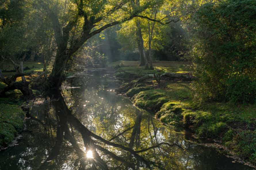The Beaulieu River in the New Forest National Park