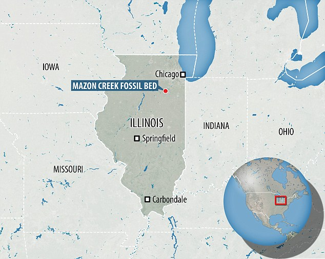 The fossil was discoveredat the famous Mazon Creek deposit of Illinois