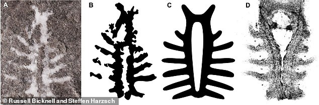 The team compared the white mineral fossil (A) with that of the brain of a modern juvenile horseshoe crab (D) and found that they two are nearly identical in their arrangements of nerves to the eyes and appendages, along with the same central opening for the esophagus
