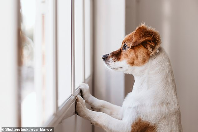 Experts from The Kennel Club have revealed that almost one in five 'pandemic pup' owners admit they are considering rehoming their dog post-lockdown