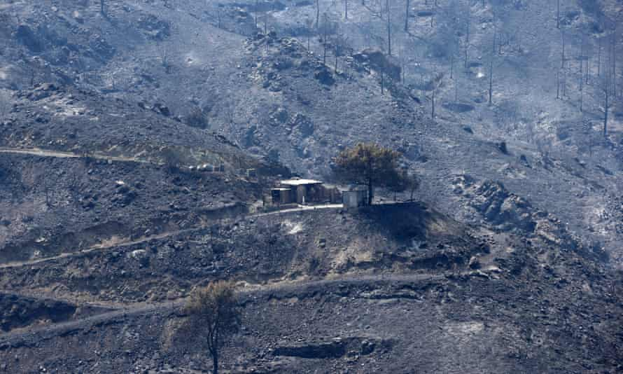 A burned mountain area in the Larnaca region