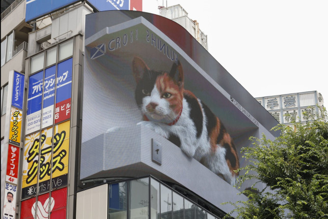 The digital billboard displays a big 3D cat waking up and looking at pedestrians as if it might jump off the screen outside Shinjuku Station. (Credits: Rodrigo Reyes Marin/ZUMA Wire/Shutterstock)