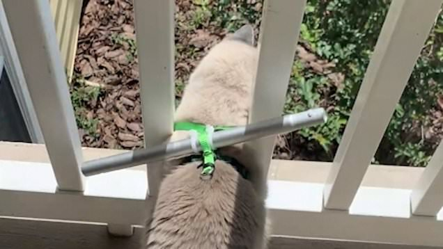 Cat hack stops pet from leaping from second floor balcony