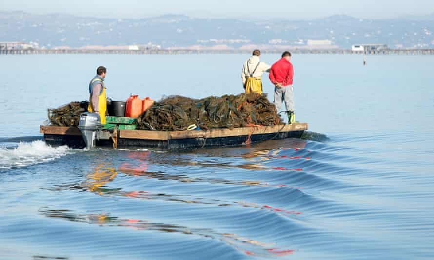 Mussel fishermen on the Ebro delta