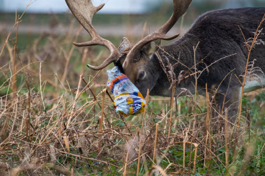 Shocking images reveal the distressing effects of litter on wildlife in London parks this year Picture: The Royal Parks