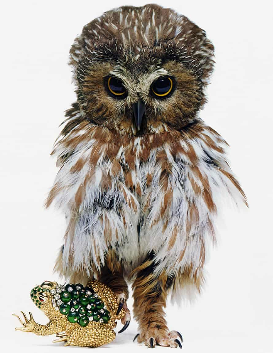 Hiro used a live owl for his shot of a piece of David Webb jewellery in 1963 ©HIRO
