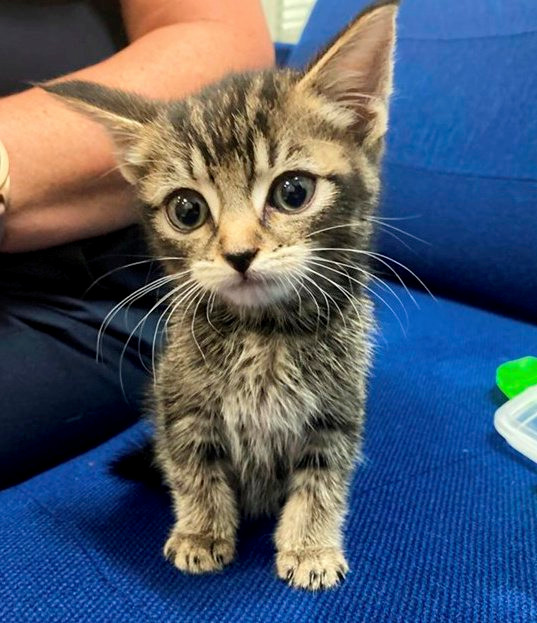 A five-week-old kitten found on a CrossCountry service at Birmingham New Street station
