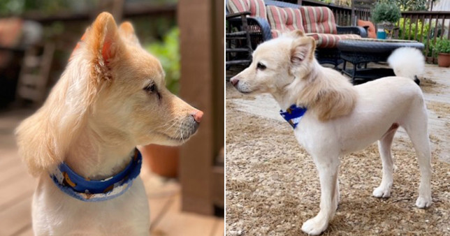 pictures of george washington, the dog with a mullet