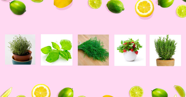 How to grow your own cocktail ingredients at home