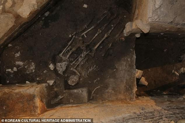 Two skeletons (pictured) were previously found at the palace in 2017, but experts believed heir deaths could have been accidental. Now with another body in similar condition surrounded by similar artifacts,'there's no denying Silla's practice of human sacrifice,' said Choi Byung-heon, the Soongsil University archaeologist