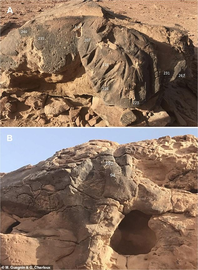 Cutting-edge dating methods revealed that the estimate was out by 6,000 years, with the sculptures likely to date back to around 6000 BC when the now arid deserts of northern Saudi Arabia were 'a savannah-like grassland scattered with lakes and trees'
